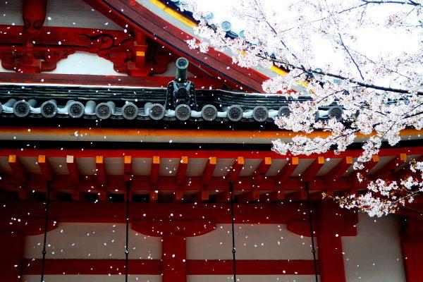 Walking through magical gardens of Kyoto.