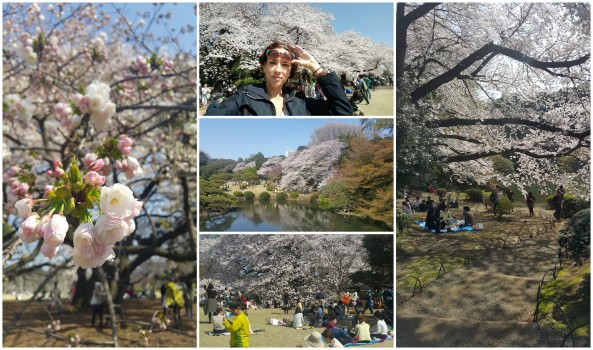 Shinjuku park Collage