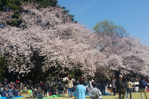 Do's and Dont's on sakura viewing in Tokyo.